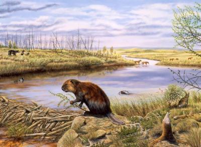 Ellesmere Island during Pliocene Epoch