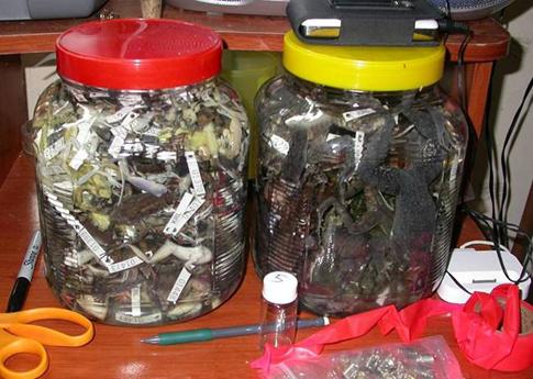 Jar of dead Frogs.