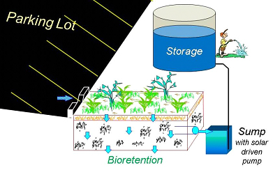 Bioretention