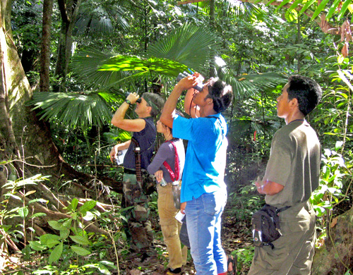 Randall Kyes (left, in black shirt) and local university students observing Sulawesi black macaques during an annual field training program in Tangkoko Nature Reserve. Image credit: Randally Kyes, UW
