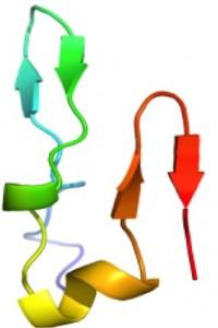 Abeta hairpin. Abeta, with hairpin turn between orange and red arrows. Image credit: University of California
