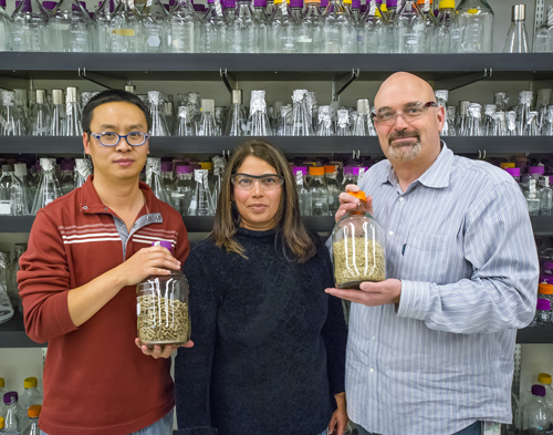 (From left) JBEI's Jian Shi, Seema Singh and Blake Simmons successfully used an ionic liquid to pre-treat mixed blends of biofuel feedstocks, a key to future commercialization. (Photo by Roy Kaltschmidt)