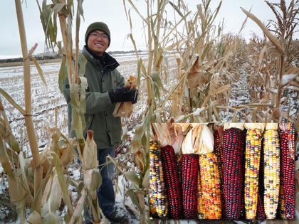 A new study led by CU-Boulder involving graduate student Chi-Chih Wu, shown here, indicates corn plants may have an altruistic side. Photo courtesy CU-Boulder