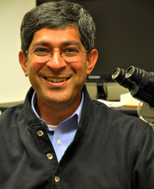 John Kuriyan is a chemist who holds appointments with Berkeley Lab, UC Berkeley and HHMI. (Photo by Rahul Das)
