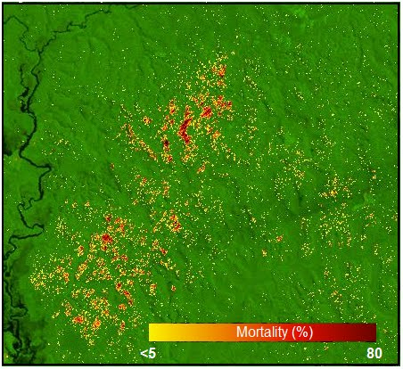 A mortality map of the Amazon near Manaus, Brazil based on Landsat satellite images shows the spatial pattern of tree mortality. Image credit: Berkeley Lab
