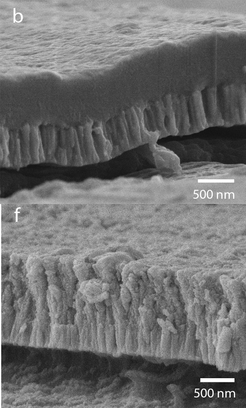 The top scanning electron microscope image (b) shows a cross section of the bioactive hydroxyapatite/YSZ coating without heat treatment. Note how the two layers are distinct. The bottom image (f) shows the coating after heat treatment. Note how the layers are now integrated. Image credit: North Carolina State University