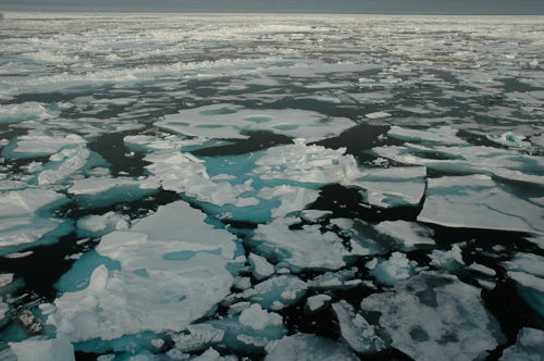 Seasonal ice on the Chuchki Sea, a marginal sea off the Arctic Ocean, in July 2010. Image credit: Bonnie Light, UW