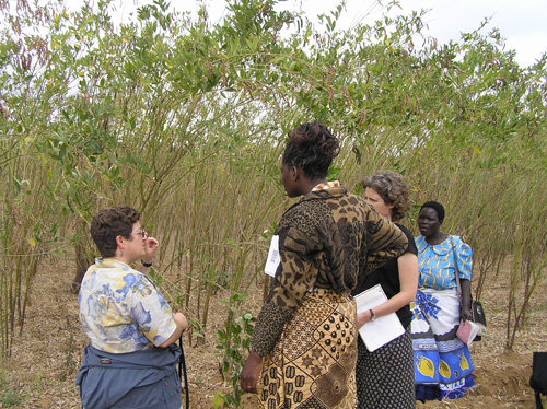 Sieglinde Snapp, MSU researcher, (left) works with Malawi farmers to help them improve their techniques and their yields. Image courtesy of MSU.