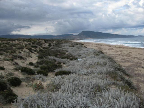 Stress in Sardinian sand dunes. Grasses, trees and shrubs have obvious differences, but in times of stress their communities exhibit less negative competitive pressure and more facilitative, positive interaction. Image credit: Bertness lab/Brown University