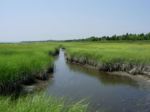 Survival in a Cape Cod salt marsh. In isolation, seaweeds and barnacles could never survive the heat stress above the tides, but they can persist in groups. Organisms under stress — even competitors — are better off together than apart. Image credit: Bertness lab/Brown University