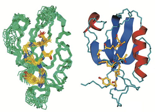 Two schematics: CN2097. The binding of the synthetic compound CN2097 (yellow in these renderings) to the synaptic protein PSD-95 restores healthy neural function in mice with the Angelman syndrome gene mutation. Image credit: Marshall Lab/Brown University