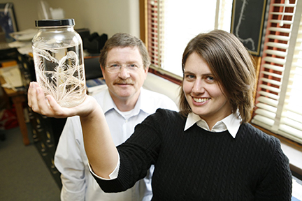 William Ausich (left) and Christina O'Malley (right) study fossils of ancient sea animals called crinoids. Here, O'Malley holds a modern crinoid. Photo by Kevin Fitzsimons, courtesy of Ohio State University.