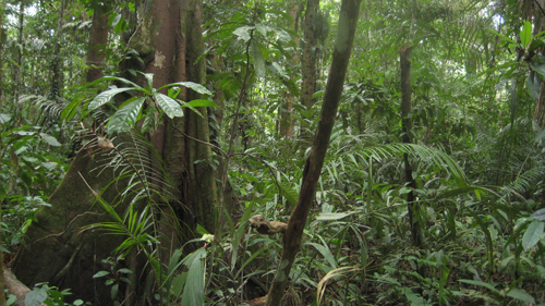The Amazon forest in Brazil. Image credit: Pete Newton.