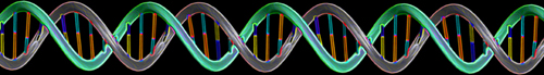 In their research, the scientists compared DNA from aye-ayes to DNA of humans. Image credit: James J. Caras, National Science Foundation