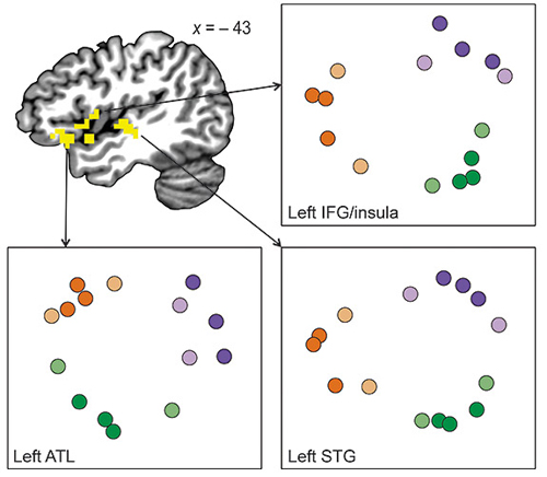 The researchers used functional magnetic resonance imaging to observe brain activity as participants viewed the symbol sequences. Images in the same community produced similar activity (above, grouped by community color) in neuron groups at the border of the brain's frontal and temporal lobes, a region involved in processing meaning. At the same time, different neural groups activated when a symbol from a different community appeared, which was interpreted as a new event. The researchers interpreted this activity as the brain associating the images with one another, and therefore as one event. (Image courtesy of Anna Schapiro)