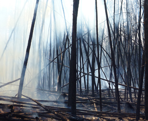 "Charred boreal forest after a fire has raged: where does the ""charcoal"" go? Image credit: Stefan Doerr, Swansea University"