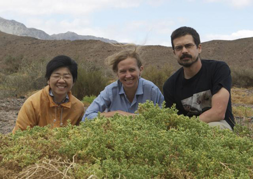 Field work. Erika Edwards (center), Matt Ogburn and postdoc Monica Arakaki found the rare succulent species Halophytum ameghinoi, which has 3-D venation, on a collecting trip to Argentina in 2010. Photo courtesy of Erika Edwards