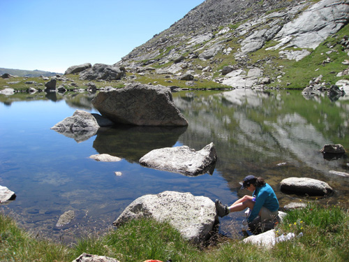 USGS Scientist Conducting Amphibian Research. Erin Muths (ARMI scientist, USGS) sampling frogs at a field site on Mt. Evans, Colorado. Location: Mt. Evans, CO, USA. Image credit: Don Campbell, USGS