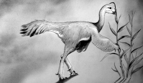 """Scientists have named a newly identified turkey-sized, plant-eating dinosaur found deep in West Texas Leptorhynchos (""""little jaw"""") gaddisi. The species belongs to a broader group of bird-like dinosaurs characterized by toothless beaks and long, slender claws. (Image by Nicholas R. Longrich/Yale)"""