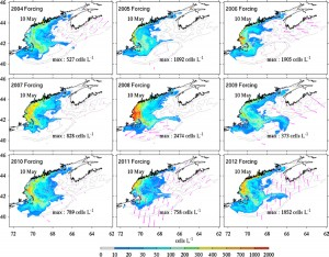 These computer simulation snapshots show projected Alexandrium fundyense cell concentrations produced under nine different weather and oceanographic scenarios representative of 2004 through 2012. All simulations were initiated using the latest cyst map based on data collected in fall 2012. The simulations incorporate sunlight, river runoff, and various wind and current patterns to predict the intensity and location of a bloom. These images do not show the highest anticipated cell concentrations, but rather the concentrations and distributions on the same day in May. This approach provides an ensemble forecast that includes years that had highly variable meteorological conditions. In all scenarios, the Alexandrium cell concentrations are moderate relative to past bloom simulations using different cyst maps to initiate the runs. (Figure by Dennis McGillicuddy, Woods Hole Oceanographic Institution; Ruoying He, North Carolina State University) (Click image to enlarge)