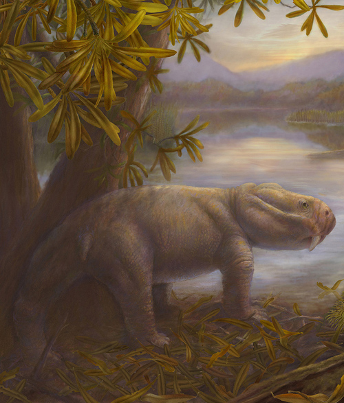 The extinction took out species like Dicynodon; other herbivores then moved in. Image credit: Marlene Donnelly/Field Museum of Natural History