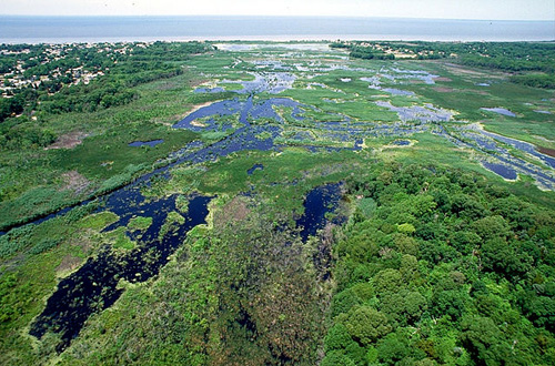 Wetlands on Cape May, New Jersey, USA. Image credit: Anthony Bley, U.S. Army Corps of Engineers