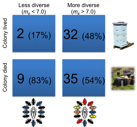 Bee colony survival is linked to the number of times a queen has mated. Image credit: David Tarpy