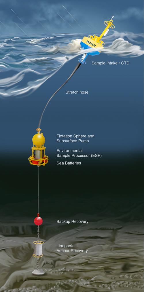 The Environmental Sample Processor (ESP) automatically collects a sample of water and then rapidly tests it for DNA and toxins that are indicative of targeted species and substances they may produce. For an animation of this process, see https://www.mbari.org/esp/  (Illustration by E. Paul Oberlander, Woods Hole Oceanographic Institution)