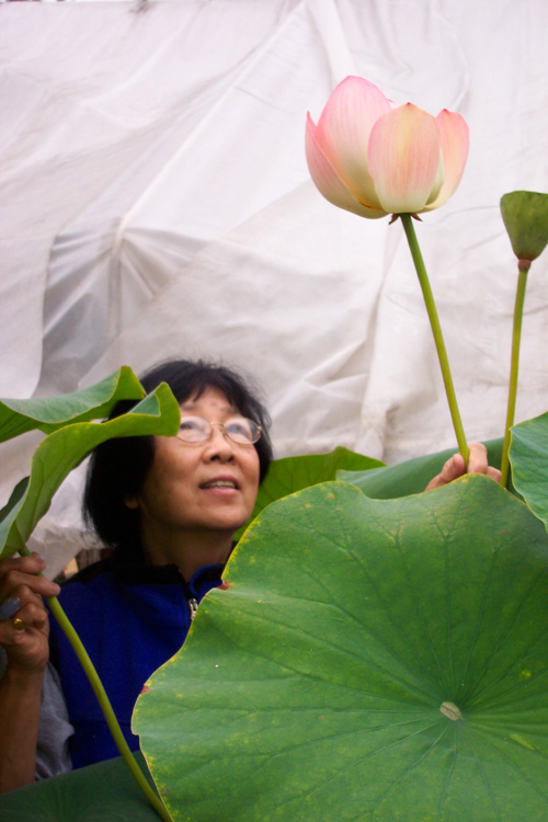 Jane Shen-Miller with Nelumbo nucifera, more commonly known as the 'sacred lotus'. Image credit: University of California