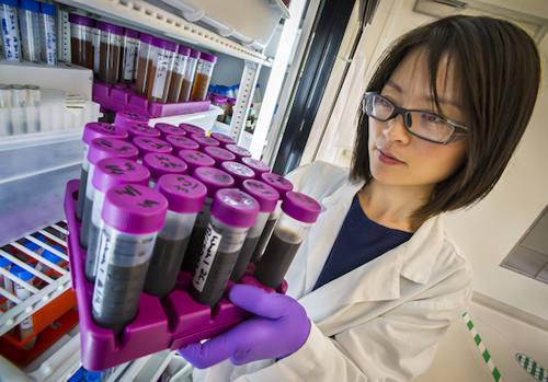 Ning Sun of the Joint BioEnergy Institute was lead author on a paper describing an enzyme-free ionic liquid pretreatment of biomass that can help boost the production of advanced biofuels. (Photo by Roy Kaltschmidt)