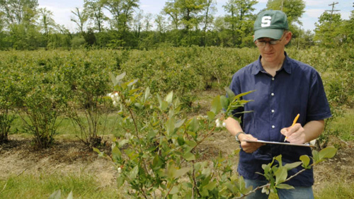 Rufus Isaacs, MSU entomologist, is investigating how to maximize bees' pollination efforts. Image courtesy of G.L. Kohuth
