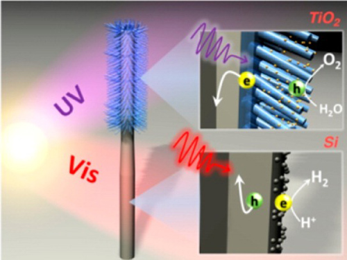 Schematic shows TiO2 nanowires (blue) grown on the upper half of a Si nanowire (gray) and the two absorbing different regions of the solar spectrum. Insets display photoexcited electron−hole pairs separated at the semiconductor-electrolyte interface to carry out water splitting with the help of co-catalysts (yellow and gray dots). Image credit: Berkeley Lab