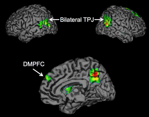 Brain regions TPJ and DMPFC. Psychologists report for the first time that the temporoparietal junction (TPJ) and dorsomedial prefrontal cortex (DMPFC) brain regions are associated with the successful spread of ideas, often called 'buzz.' Image credit: University of California