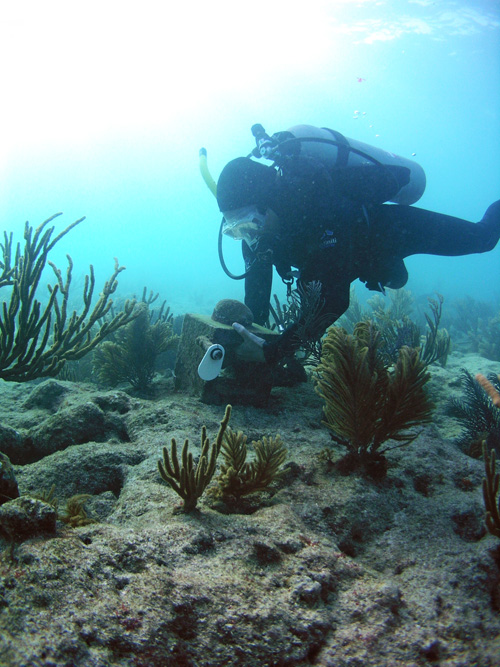 Photo of SCUBA diver working on a clacification station at Fowey Rocks, Biscayne National Park, Florida: Photo credit: Carlie Williams (USGS).