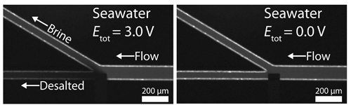 The left panel shows the salt (which is tagged with a fluorescent tracer) flowing upward after a voltage is applied by an electrode (the dark rectangle) jutting into the channel at just the point where it branches. In the right panel no voltage is being applied. Image credit: The University of Texas at Austin