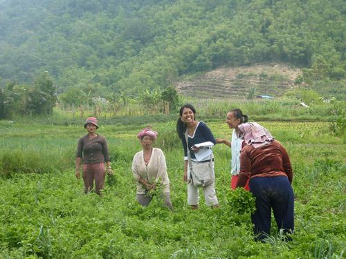 Karo Batak women working in fields. Image credit: Geoff Kushnick, UW
