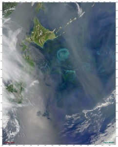 """This satellite image shows a large phytoplankton bloom, about 150 miles in diameter, that occurred in the Northwest Pacific Ocean off the coast of Hokkaido, Japan in May 2009. Researchers have assumed that such blooms were driven by iron in the post-Ice Age ocean, but a new study by WHOI scientists suggests that a """"perfect storm"""" of light and nutrients spurred an explosion of phytoplankton and other tiny creatures in the North Pacific 14,000 years ago. Photo by Norman Kuring, MODIS Ocean Color Team/NASA (Click image to enlarge)"""