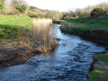 The contaminated waters of the River Hayle in Cornwall which harbours healthy trout. nImage credit: University of Exeter