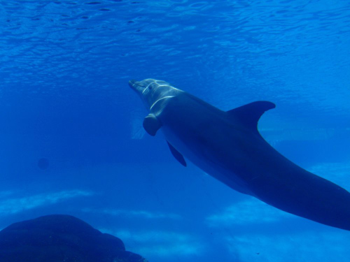 This photo, of a then-16-year-old dolphin named Kai, was taken at the Texas State Aquarium. Photo by Jason Bruck