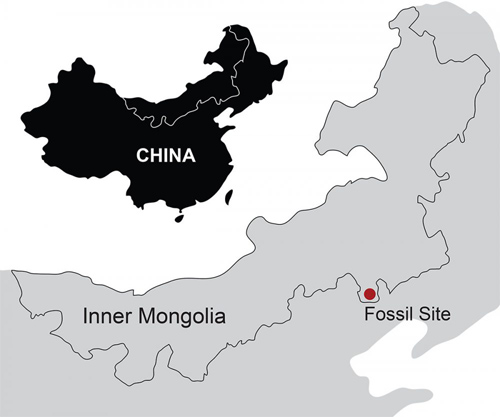 A new Jurassic fossil, Megaconus mammaliaformis, was found at the famous Daohugou Fossil Site northeast of Beijing. Image courtesy of Luo Lab