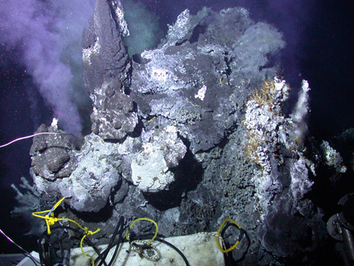 Inferno vent at Axial Volcano. Photo courtesy of NOAA Vents Program, NeMO Project