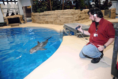Jason Bruck, PhD'13, records video of a then-four-year-old dolphin named Allison at the Brookfield Zoo. In his study, Bruck played recordings of signature whistles to dolphins that had once lived with each other. He found that dolphins responded significantly more to whistles from animals they once knew. Photo by Jim Schulz/Chicago Zoological Society