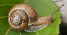 Snail. Image credit: University of Exeter