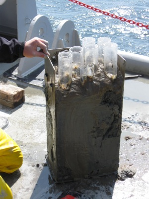 A sediment sample from the Gulf of Saint Lawrence. Photo courtesy of George Luther