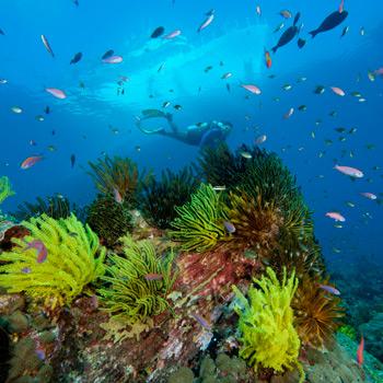 Korallen. Image credit: © Juergen Freund / WWF Canon