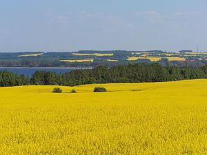 Landschaft mit Rapsfeldern am Wohlenberger Wiek. Author: Ch.Pagenkopf (Image source: Wikipedia)