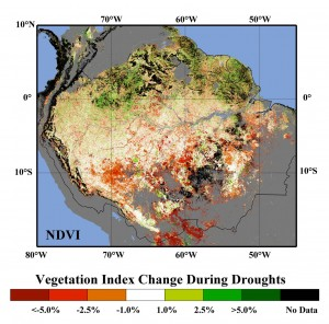 During the 2005 and 2010 droughts, satellites detected decreased vegetation greenness—or a lower Normalized Vegetation Index (NDVI)—over the southern Amazon rainforest (orange and red regions). NDVI is derived from MODIS instruments on NASA's Terra and Aqua satellites. Image courtesy of Ranga Myneni, Jian Bi and NASA (Click image to enlarge)