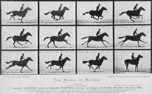 "Eadweard Muybridge's famous ""Horse in Motion"" marked the beginning of high-speed photography. Ultra-fast laser light pulses like those used in this research essentially follow the same idea. Image credit: University of Arizona"