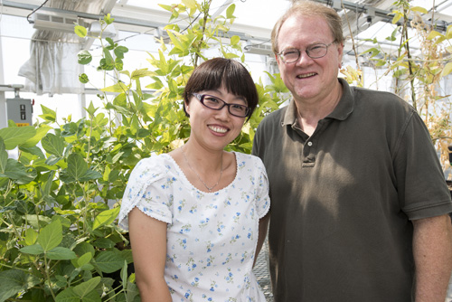 Gary Stacey and Yan Liang. A new discovery by an MU team of researchers could be the first step in helping farmers use less nitrogen for corn, soybeans and other crops. Image credit: University of Missouri