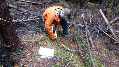 Brian Henn buries an iButton sensor in the ground at a study plot site. The small device will record temperature readings every hour for 11 months. Image credit: University of Washington